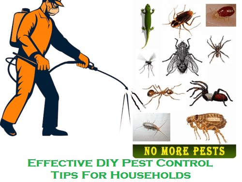Effective DIY Pest Control Tips For Households