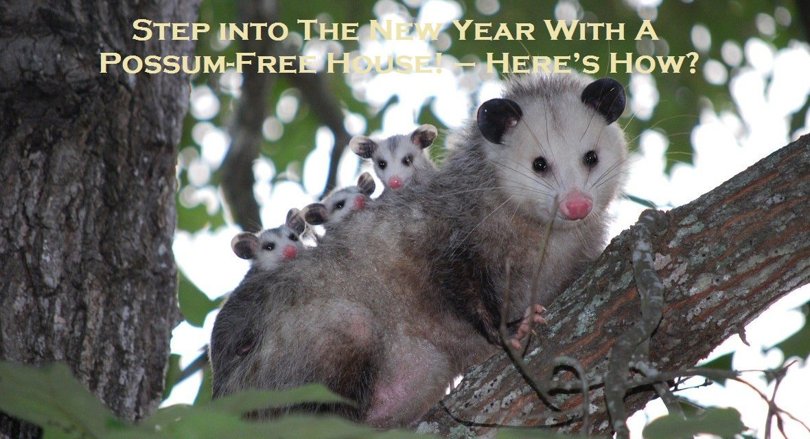 Step into The New Year With A Possum-Free House! – Here's How?                                                                                                                                                                                                                                                                                                                                                                                                                                                                                                                                                                                                                                                                                                                                                                                                                                                                                                                                                                                                                                                                                                                                                                                                                                                                                                                                                                                                                                                                                                                                                                                                                                                                                                                                                                                                                                                                                                                                                                                                                  