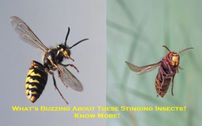 What's Buzzing About These Stinging Insects? – Know More!