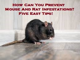 How Can You Prevent Mouse And Rat Infestations? Five Easy Tips!