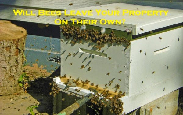 Will Bees Leave Your Property On Their Own?