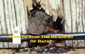 How To Stop The Re-Entry Of Rats?