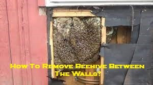 How To Remove Beehive Between The Walls?