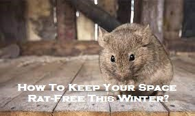 How To Keep Your Space Rat-Free This Winter?