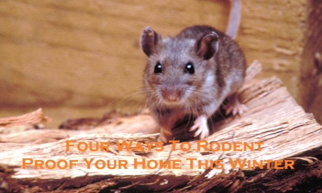 Four Ways To Rodent Proof Your Home This Winter