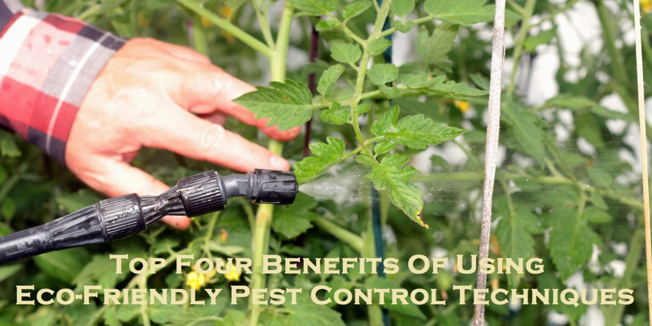 Top Four Benefits Of Using Eco-Friendly Pest Control Techniques