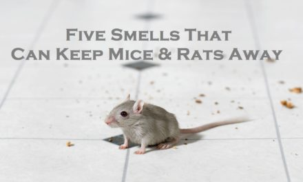 Five Smells That Can Keep Mice & Rats Away
