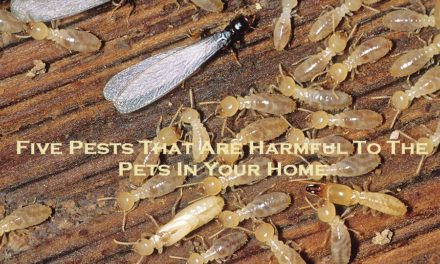 Five Pests That Are Harmful To The Pets In Your Home