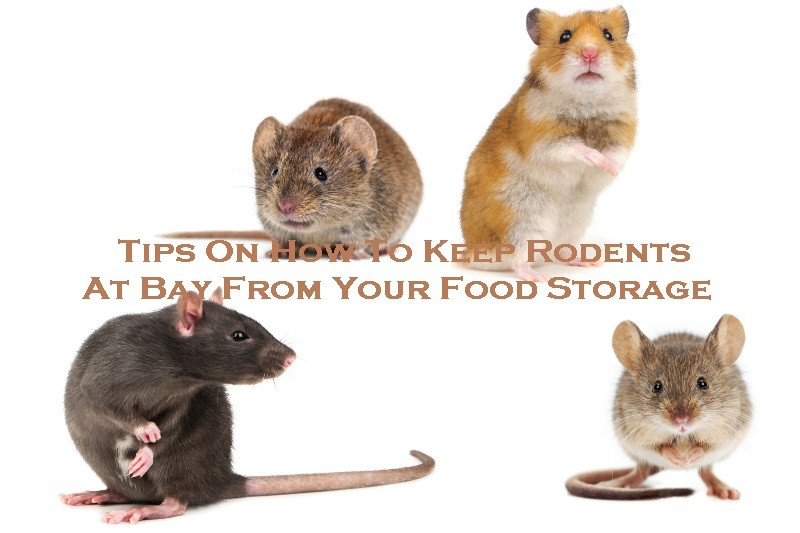 Tips On How To Keep Rodents At Bay From Your Food Storage