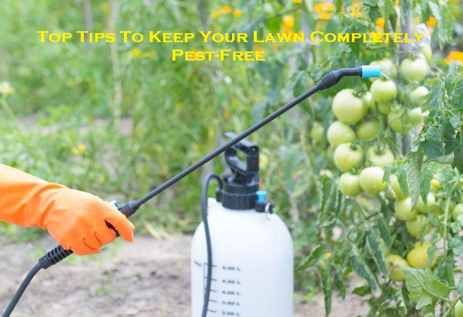 Top Tips To Keep Your Lawn Completely Pest-Free