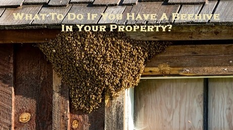 What To Do If You Have A Beehive In Your Property?
