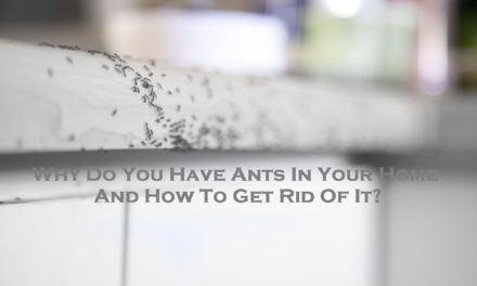 Why Do You Have Ants In Your Home And How To Get Rid Of It?