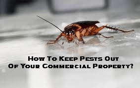 How To Keep Pests Out Of Your Commercial Property?